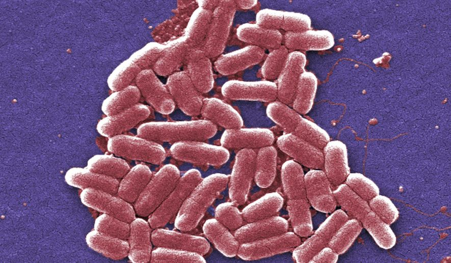 FILE - This 2006 colorized scanning electron micrograph image made available by the Centers for Disease Control and Prevention shows a strain of the Escherichia coli bacteria. E. coli is one of the germs that can cause sepsis. Once misleadingly called blood poisoning or a bloodstream infection, sepsis occurs when the body goes into overdrive while fighting an infection, sort of friendly fire that injures its own tissue. The cascade of inflammation and other damage leads to shock, amputations, organ failure or death. (Janice Carr/CDC via AP)