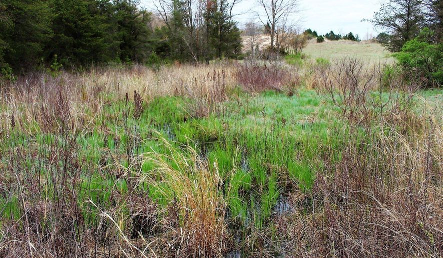 An interdunal wetland in the Singapore Dunes, seen May 4, 2017. This part of the land, owned now by North Shores of Saugatuck LLC, is not slated for development. (Amy Biolchini /The Grand Rapids Press via AP)