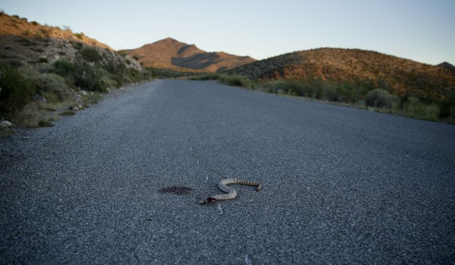 In this May 26, 2017, photo, a snake lies dying in a road at the Gold Butte National Monument near Bunkerville, Nev. The monument along the Arizona border in Southern Nevada is among the national monuments under Trump administration review. (AP Photo/John Locher)
