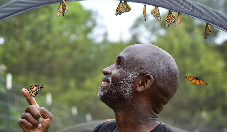 ADVANCE FOR USE JUNE 4, 2017-Joel Enge poses for a portrait with monarch butterflies at Kingdom Life Academy's garden in Tyler, Texas, on Friday, May 12, 2017. Enge has been raising butterflies as a hobby for 16 years and typically does a butterfly release each year with either his students or his church. (Chelsea Purgahn/Tyler Morning Telegraph)