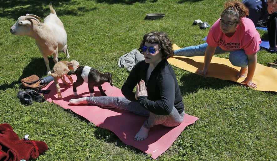 In this May 7, 2017, photo, Jen Johnson practices yoga while goats sit on her mat at Harrison Farm in Groveport, Ohio. The class integrates an outdoor environment with yoga practice, goats are allowed to wander during the class. (Brooke LaValley/The Columbus Dispatch via AP)