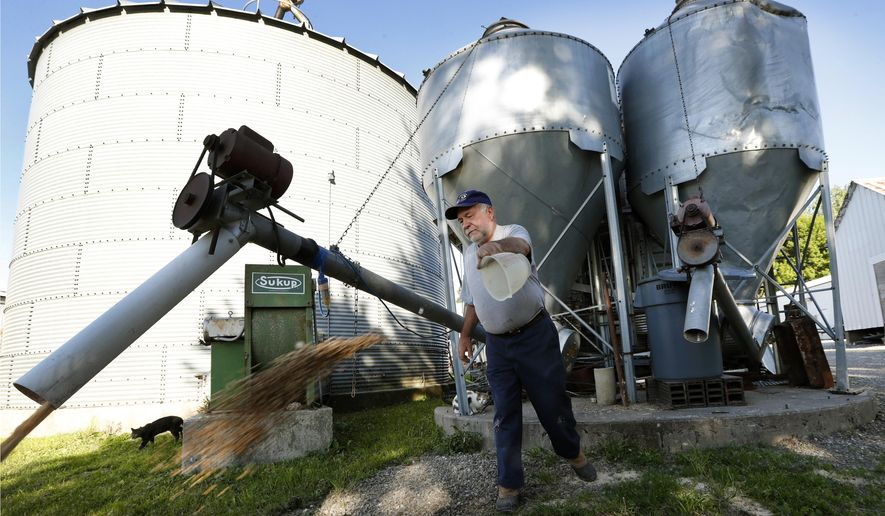 In this Thursday, June 1, 2017 photo, Chris Petersen throws feed to a skid loader on his farm, in Clear Lake, Iowa. Farm groups and some members of Congress from farm states are decrying proposed cuts to crop insurance and other safety net programs for farmers included in President Donald Trump's budget.  (AP Photo/Charlie Neibergall)