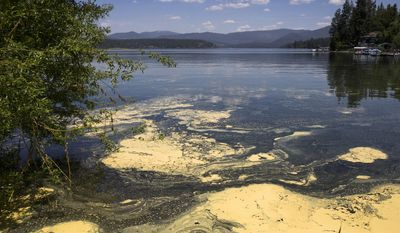 ADVANCE FOR WEEKEND EDITIONS, JUNE 10-11 - In this Tuesday, May 30, 2017 photo, pollen collects along the shoreline at Hayden Lake, near Coeur d'Alene, Idaho. (Lisa James/Coeur D'Alene Press via AP)