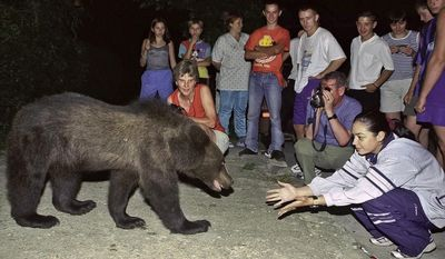 FILE - In this in this September 2002 file photo, a bear approaches a group of tourists gathered to watch it on the outskirts of Brasov, Romania. On Saturday, June 10, 2017 the website of a fortress connected to Vlad the Impaler announced that Romanian authorities closed the 13th Century fortress after a mother bear and her cubs were found roaming the area. Romania is home to between 5,000 and 6,000 brown bears. (AP Photo/Octavian Tibar, File)