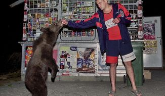 FILE - In this in this Sept. 2002 file photo, a bear receives sweets from a shop owner on the outskirts of Brasov, Romania. On Saturday, June 10, 2017 the website of a fortress connected to Vlad the Impaler announced that Romanian authorities closed the 13th Century fortress after a mother bear and her cubs were found roaming the area. Romania is home to between 5,000 and 6,000 brown bears. (AP Photo/Octavian Tibar, File)