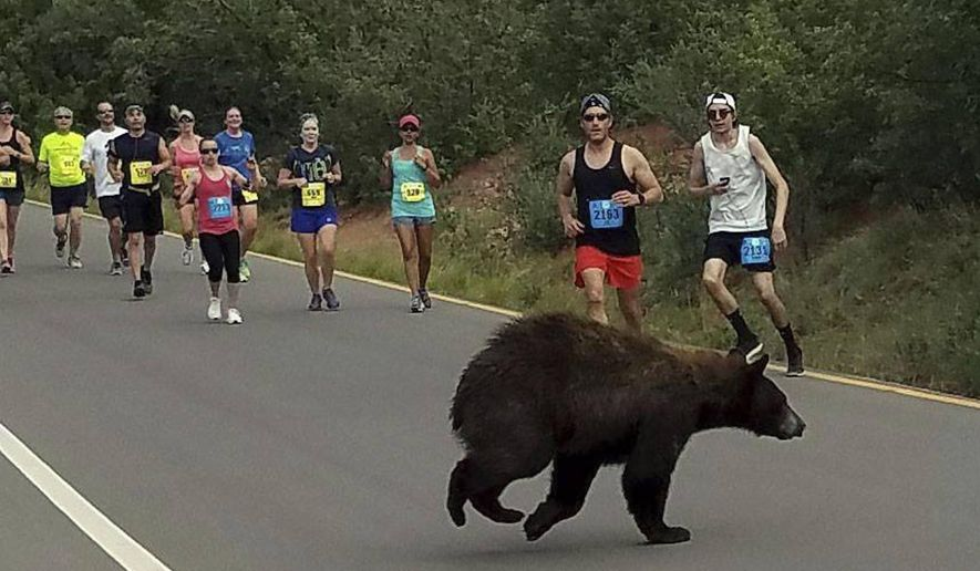 In this photo provided by Donald Sanborn, a bear walks across the street as runners compete in the Garden of the Gods 10 Mile Run near Colorado Springs, Colo., Sunday, June 11, 2017. Sanborn says the animal seemed to be trying to decide whether to zip across the road filled with runners when a large enough gap finally emerged for the bear to get through. (Donald Sanborn via AP)