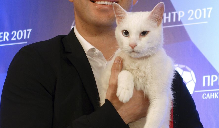 Zenit's soccer player Aleksandr Kerzhakov holds white colored and blue eyes 1, 5 years old cat named Achilles at a news conference in St. Petersburg, Russia, Thursday, June 15, 2017. Achilles was chosen by the Hermitage Museum to work as a foreteller of the results of the soccer matches at the Confederations Cup. (AP Photo/ Irina Titova)