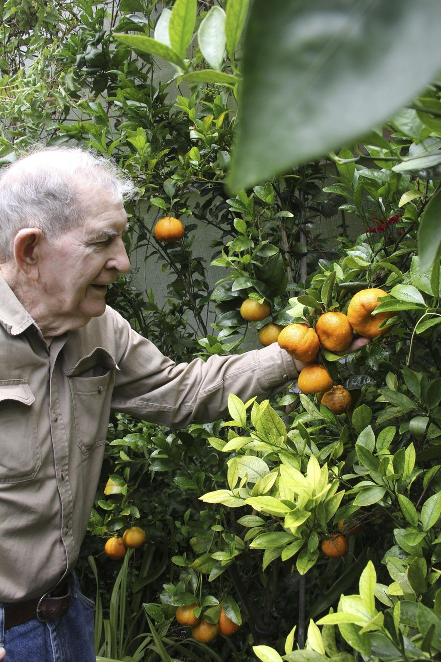 This June 9, 2017 photo, Russ Finch shows off his tango mandarins, a hybrid that contains no seeds in Alliance, Neb.  Finch has created greenhouses that run on geothermal heat. Geothermal heat produces heat from the ground through a singular heat source that dispenses heat through a tubing system.  He began selling his geothermal greenhouses with his business Greenhouse in the Snow about three years ago.  (Torri Brumbaugh/The Star-Herald via AP)