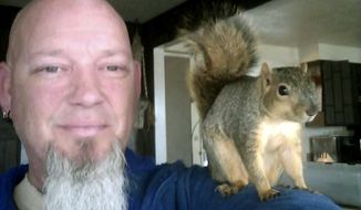 This undated photo provided by Adam Pearl shows Pearl with his pet squirrel Joey in Meridian, Idaho. Pearl says Joey was so young he still had his eyes closed when friends found him on the ground late in the summer of 2016 after he fell out of his nest. Pearl says Joey climbed onto his shoulder for an affectionate goodbye earlier in June 2017, then scampered up a backyard apple tree at his Meridian home and hasn't been seen since. Joey made headlines in February 2017, when police nabbed a burglary suspect who reported fleeing a home after being attacked by a squirrel. (Adam Pearl via AP)
