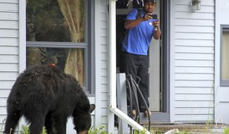 Smith Savelio takes a photo from his doorway of a black bear that was in his front yard in Anchorage, Alaska, on Thursday, June 22, 2017. A black bear has been seen for days raiding trash cans in the east Anchorage neighborhood. (AP Photo/Mark Thiessen)