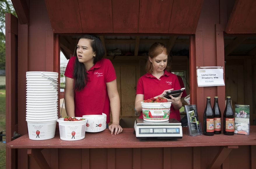 In this Tuesday, May 23, 2017, photo, Hannah Waring, left, a student at Loudoun Valley High School, and Abby McDonough, a student at Liberty University, work in the strawberry stand at Wegmeyer Farms in Hamilton, Va. Waring and McDonough are working at Wegmeyer Farms for the summer. Summer jobs are vanishing as U.S. teens spend more time in school and face competition from older workers. (AP Photo/Carolyn Kaster)