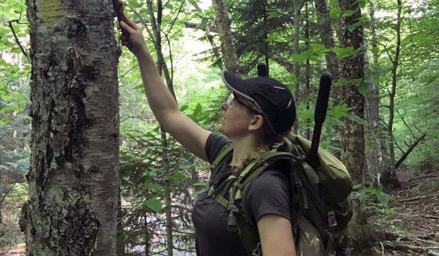 In a June 15, 2017 photo, Sally Gorrill, a captain in the U.S. Army, removes unauthorized markings from a tree along a trail in a wilderness area of the White Mountain National Forest in New Hampshire. Several soldiers looking to transition to a new career are spending the summer in the forest as part of an internship, getting training in land management skills as they prepare to transition out of the service. (Terry Asbridge via AP)