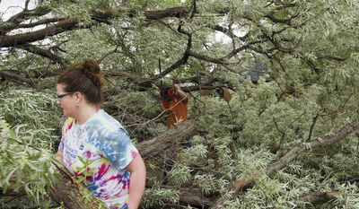 In this Tuesday, June 27, 2017, photo, Amy Smith, front, moves branches as Darren Bressler cuts them down from a large tree that fell in Laramie, Wyo. Wind gusts of up to 90 mph knocked out power and downed trees in Laramie on Tuesday. (Shannon Broderick/Laramie Daily Boomerang via AP)