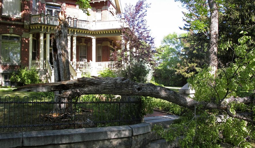 A tree was snapped in half by a 5.8-magnitude earthquake felt in Helena, Montana, on Thursday, July 06, 2017. The quake and numerous aftershocks were centered about 30 miles away in Lincoln, Montana, and could be felt as far away as Washington state. (AP Photo/Matt Volz)