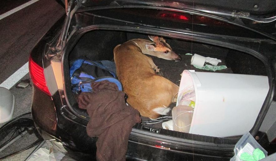 In this Sunday, July 2, 2017 photo released by U.S. Fish and Wildlife Service, an endangered Key deer sits tied up in the trunk of a vehicle in Little Torch Key, Fla. Two men were arrested early Sunday morning after a Monroe County deputy pulled over their car for having a tail light out. Three of the endangered deer were found tied up in the vehicle. A buck, found in the trunk, has been euthanized, authorities said. (United States Fish and Wildlife Service via AP)