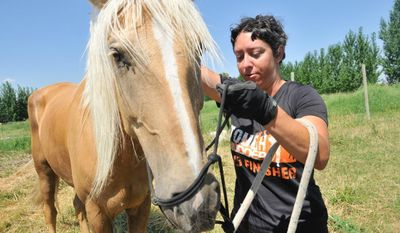 In this Monday, July 9, 2017 photo, Meredith Cherry puts a halter on her horse, Apollo, near Burley, Idaho. Cherry is on a journey to reach all 48 contiguous states to raise awareness about domestic violence. (Laurie Welch/The Times-News via AP)