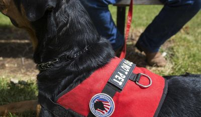 "In this June 30, 2017 photo, Apollo, a PTSD service dog, wears a ""Do Not Pet"" vest that was custom made for his size during a trip to the park in Gillette, Wyo. (Kelly Wenzel/Gillette News Record via AP)"