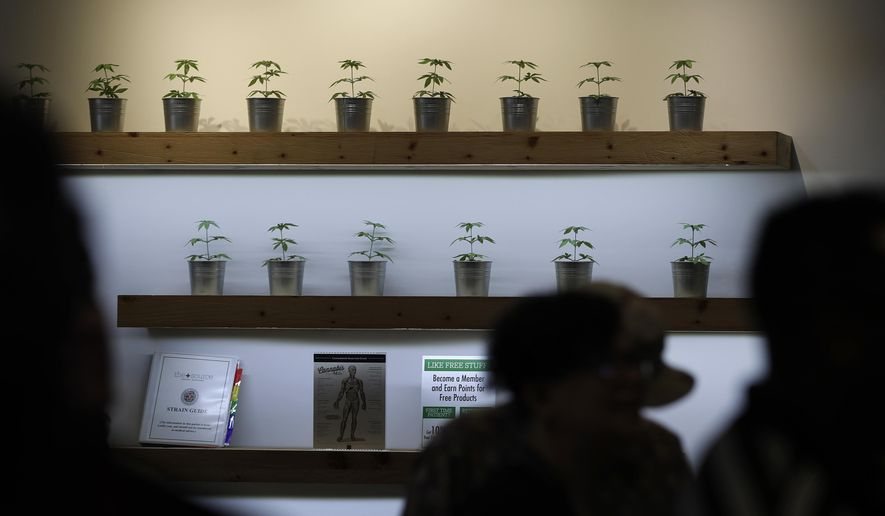 In this July 1, 2017, photo, plants are on display during the first day of recreational marijuana sales at The Source dispensary in Las Vegas. (AP Photo/John Locher, File)