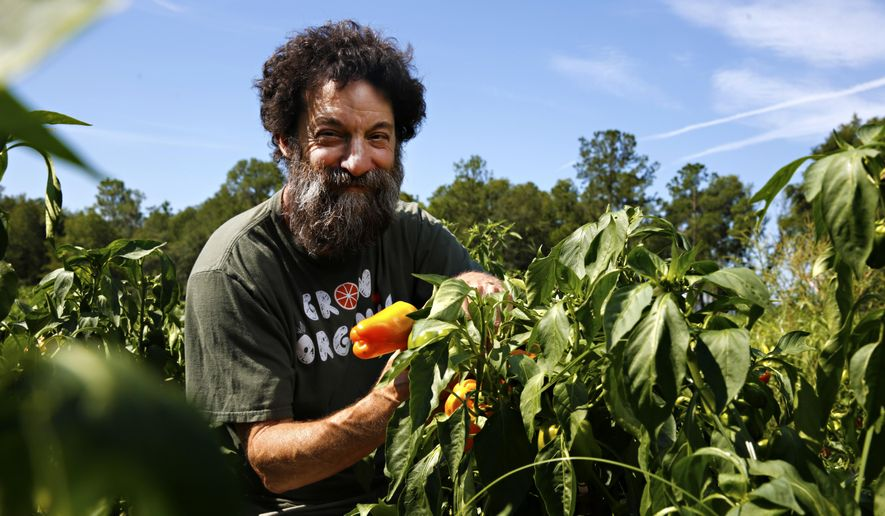 ADVANCE FOR USE SUNDAY, JULY 15 - In this July 7, 2017 photo, Marty Mesh, executive director of Florida Organic Growers, poses with a pepper plant at Siembra Farms in Gainesville, Fla. Mesh helped form the nonprofit organization to educate farmers and the public about organic production through programs and initiatives. (Andrea Cornejo/The Gainesville Sun via AP)