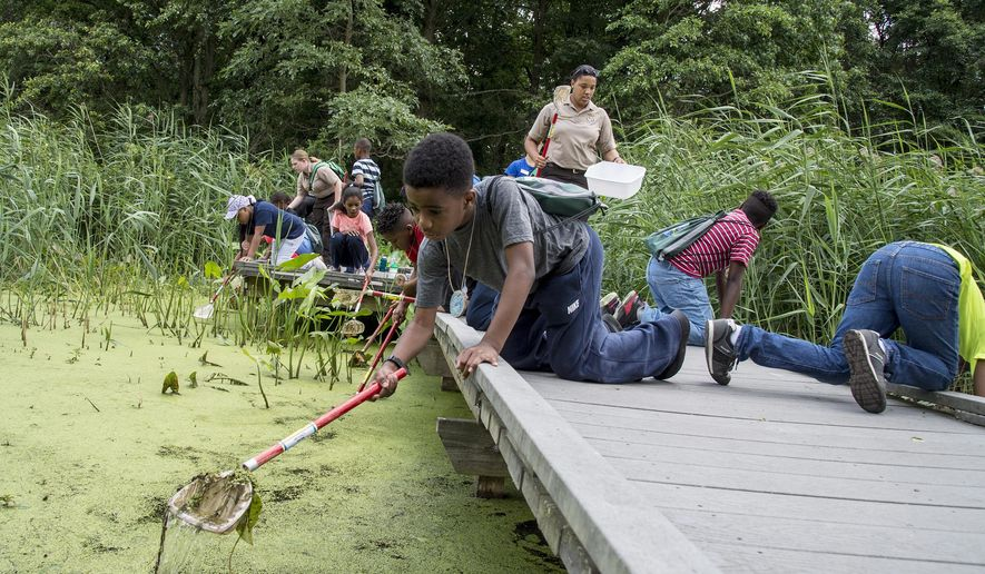ADVANCE FOR SATURDAY JULY 15 AND THEREAFTER - In a June 27, 2017 photo, a group of 5th graders including Safir Wearind, left, 10, participate in a camp at the refuge trying to catch macro invertebrates in the freshwater tidal marsh at the Heinz Wildlife Refuge in Tinicum, Pa. Brianna Patrick, environmental education supervisor at the refuge, and the leader of the camp, stands in the background. (Clem Murray/The Philadelphia Inquirer via AP)