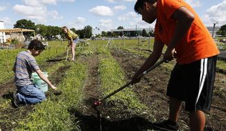 ADVANCE FOR SATURDAY, JULY 22 AND THEREAFTER - In a Monday, June 26, 2017 photo, from left, Ethan Greco, 15, Grace Halleland, 15, and Axel Gonzalez Martinez, 15, remove weeds as part of the Rochester Alternative Learning Center's green thumb initiative, in a garden next to Channel One Food Bank in Rochester, Minn. (Andrew Link/The Rochester Post-Bulletin via AP)