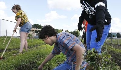ADVANCE FOR SATURDAY, JULY 22 AND THEREAFTER - In a Monday, June 26, 2017 photo, from left, Grace Halleland, 15, Ethan Greco, 15, and Shontell Murdock, 15, remove weeds as part of the Rochester Alternative Learning Center's green thumb initiative Monday, June 26, 2017, in a garden next to Channel One Food Bank in Rochester., Minn. (Andrew Link/The Rochester Post-Bulletin via AP)