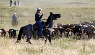 A cowboy and his horse hold the left flank of a cattle drive during the annual 121st Cheyenne Frontier Days cattle drive on Sunday morning, July 16, 2017 in Cheyenne, Wyo. More than 500 head of cattle were driven from Horse Creek Road down to Frontier Park, with hundreds of spectators lining the roads. (Jacob Byk/Wyoming Tribune Eagle via AP)