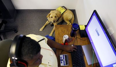In this June 19, 2017 photo, Adrian Buard's seeing eye dog, Dash sits next to him in the call center at Bold Sale Solutions, a subsidiary of Dallas Lighthouse of the Blind in Dallas. (Nathan Hunsinger/The Dallas Morning News via AP)