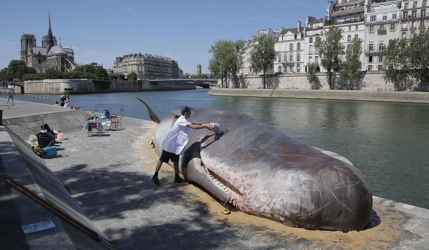 Tim Van Noten a member of a Belgian artists' collective pours water on a real-looking, life-size whale sculpture is displayed along the Seine River in Paris, France, Friday, July 21, 2017. A Belgian artists' collective installed a very real-looking, life-size whale sculpture alongside the Seine River on Friday, eliciting surprise and concern from tourists and Parisians alike. (AP Photo/Michel Euler)