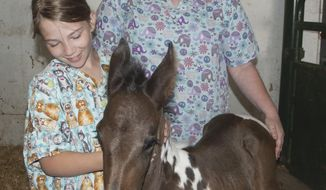 On June 8, 2016, Tharp Vet Clinic technician Victoria Martin, right, and volunteer Aubrey Avant visit Stony the mustang pony at Tharp Vet Clinic. Tharp's technicians helped bring Stony back from near death after he was found abandoned in the Fifteen mile Herd Management Area in early June 2016. (Karla Pomeroy/Northern Wyoming Daily News via AP)