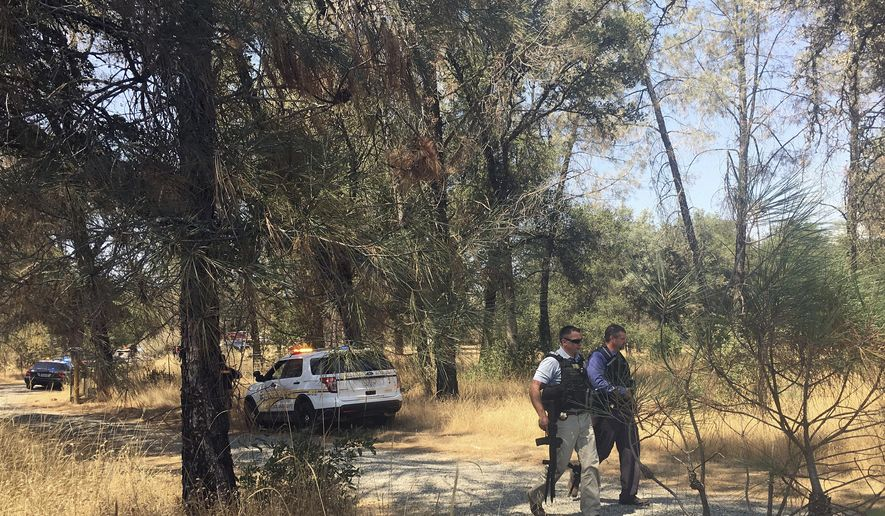 Officers search for a suspect after a shooting in Dobbins, Calif., Tuesday, Aug. 1, 2017. Two California sheriff's deputies were shot and wounded after they responded to reports of an armed and agitated man pulling up plants in the garden of a rural Rastafarian church, authorities said. The shooter remained at large, and the Yuba County deputies were in serious condition and undergoing surgery at Sutter Roseville Medical Center after the shooting in the rural community of Oregon House about 55 miles north of Sacramento. (AP Photo/Sophia Bollag)
