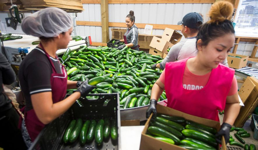 Employees of Imperial's Garden box cucumbers at the produce-maker's processing facility in Wapato, Wash. on Friday, July 21, 2017. (Jake Parrish/Yakima Herald-Republic via AP)