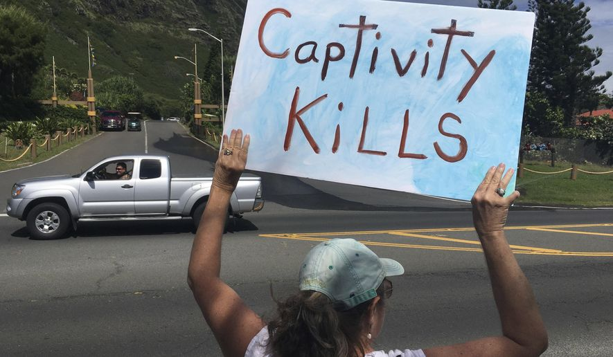 In this May 13, 2017 photo, an activist holds a sign during a protest outside Sea Life Park in Waimanalo, Hawaii. A marine mammal that has contributed to groundbreaking science for the past 30 years is again making waves after being sold to the marine amusement park in Hawaii. Kina is a false killer whale, a large member of the dolphin family. Animal-rights activists say she deserves a peaceful retirement in an ocean-based refuge but is instead being traumatized by confinement in concrete tanks at Sea Life Park. But Kina's former Navy trainer and a longtime marine mammal researcher say no such sea sanctuaries exist, and the park is the best place for the 40-year-old toothy cetacean. (AP Photo/Caleb Jones)