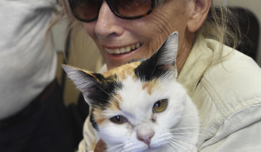 In this Monday, Aug. 7, 2017 photo, Ana Fontana holds her calico cat Trotsy after being reunited with the cat in Fort Walton Beach, Fla. Krueger and Fontana were traveling from Arizona to New Jersey when the stopped for a meal in Crestview, Florida on June 18, 2017. Trotsy escaped from the couple's car and was lost for 46 days before an animal control officer trapped her and notified the couple, who traveled from New Jersey to pick up the cat. (Devon Ravine/Northwest Florida Daily News via AP)