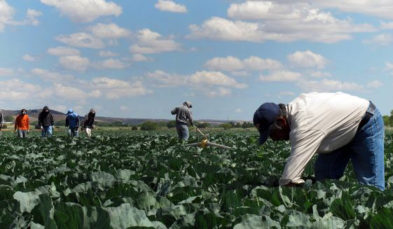 The Migration Policy Institute found that farms are plugging gaps by using machines and enticing workers with health care. (Associated Press)
