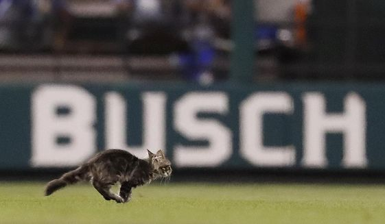 A cat runs across the field at Busch Stadium during the sixth inning of a baseball game between the St. Louis Cardinals and the Kansas City Royals on Wednesday, Aug. 9, 2017, in St. Louis. (AP Photo/Jeff Roberson)