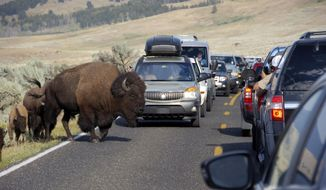FILE - In this Aug. 3, 2016, file photo, a large bison blocks traffic as tourists take photos of the animals in the Lamar Valley of Yellowstone National Park in Wyoming. Sometime within the next four to six years, Yellowstone is expected to reach its capacity for being able to handle all the vehicles that tourists drive through the park every year to see its sights. The National Park Service says potential solutions that will be discussed include instituting a reservation system or passenger shuttles to control the number of visitors during peak times for the busiest attractions in the park. (AP Photo/Matthew Brown, File)