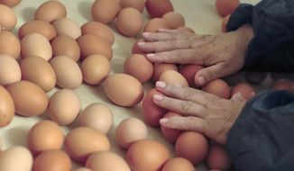 A woman touches fresh eggs at a chicken farm in Gaesti, southern Romania, Friday, Aug. 11, 2017.  The European Union said Friday that it plans to hold an extraordinary meeting late next month over a growing tainted egg scandal as it revealed that products contaminated with an insecticide have now spread to 17 countries.(AP Photo/Vadim Ghirda)