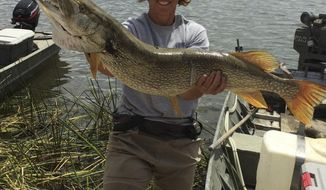 This Aug. 2015 photo provided by the Nevada Department of Wildlife shows state fisheries biologist Kim Tisdale holding one of the Northern pike removed from Comins Lake in eastern Nevada during an effort to eradicate the invasive predators. The agency is offering a $10,000 reward to help nab the suspect who apparently introduced the species into the lake again in recent months. (Courtesy of the Nevada Department of Wildlife via AP)