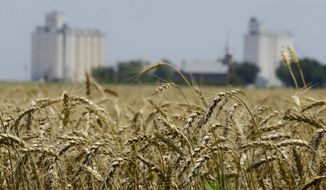 Wheat stands ready for harvest in a field. (AP Photo/Orlin Wagner, File)