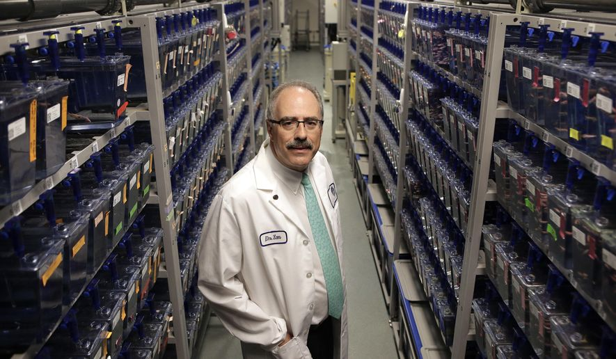 In this Monday, Aug. 14, 2017 photo, researcher Leonard Zon, founder and director of the Stem Cell Program at Boston Children's Hospital, stands for a photograph among rows of containers holding about 300,00 zebrafish in a lab at the hospital, in Boston. Democratic Gov. Deval Patrick pushed through a $1 billion, 10-year life sciences initiative that helped pay for the stem cell program at the hospital. The zebrafish are used in stem cell research. (AP Photo/Steven Senne)