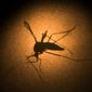 While the U.S. government spent liberally to combat the Zika epidemic, public health officials warn pockets of the once-fearsome disease might still pop up in the country, requiring medical officials to remain vigilant. (Associated Press)