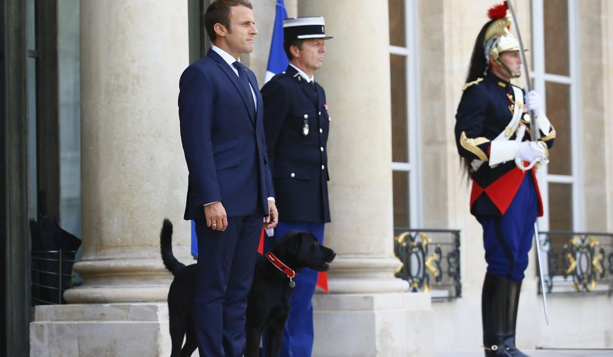 France's President Emmanuel Macron waits on the steps of the Elysee Palace, with his newly adopted dog, a labrador crossed griffon named Nemo, as he prepares to welcome the President of Niger Mahamadou Issoufou, in Paris, France, Monday, Aug. 28, 2017. The leaders of France, Germany, Italy and Spain are meeting with African counterparts to find ways to curb illegal migration across the Mediterranean to European shores. (AP Photo/Francois Mori)