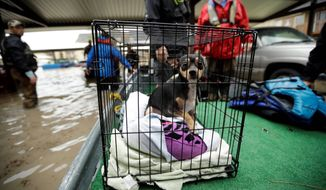 A dog looks out from a crate as a family is evacuated from their apartment on Tuesday in Kingwood, Texas. Some evacuees are keeping pets with them, while others are taking them to shelters. (Associated Press)