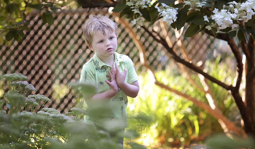 Jay Klippel, 4, who has autism, explores the backyard of his Madison, Wis. home on Aug. 30, 2017.   Klippel doesn't speak, so therapists have given him picture cards to explain his wishes, such as cards indicating he's hungry or needs to go to the bathroom. He is expected to get an electronic communication device soon.  (John Hart/Wisconsin State Journal via AP)