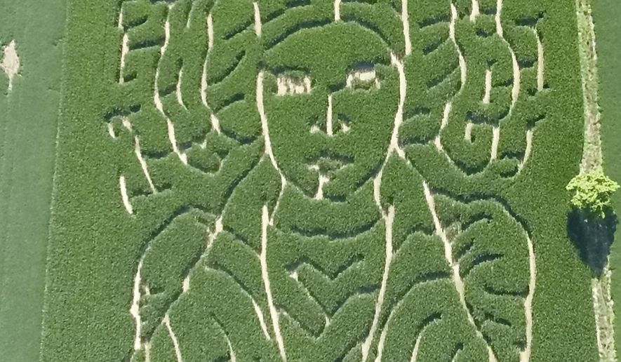 """This July 12, 2017 photo provided by Jeremy Goebel shows a corn maze with trails outlining the face of """"Star Wars"""" character Princess Leia. Gobble planted it to honor the late actress Carrie Fisher on his farm in Evansville, Ind. Goebel designed the maze in February, more than a month after Fisher's late December death, and planted it this spring using a GPS device. The corn is now mature and its trails outline the """"Star Wars"""" character's face, distinctive hairstyle and part of her upper body. (Jeremy Goebel via AP)"""