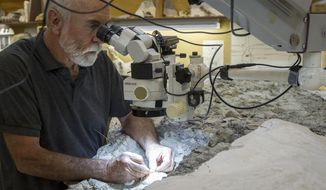 Rick Hunter, paleontologist, meticulously excavates rock from around the raptor bones at Thanksgiving Point in Lehi, Utah on Thursday, Aug. 31, 2017. The nine ton chunk of rock may contain as many as six different animals and may take as long as 10 years to fully excavate. (Adam Fondren/The Deseret News via AP)