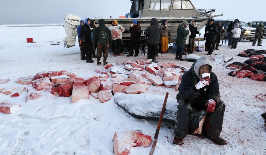 FILE--In this Oct. 7, 2014, file photo, a cutter takes a break and drinks a soup of boiled bowhead whale meat and blubber while butchering a whale in a field near Barrow, Alaska. The Alaska Eskimo Whaling Commission is seeking a significant increase in the number of bowhead whales subsistence hunters from 11 villages can harvests each year. (AP Photo/Gregory Bull, file)