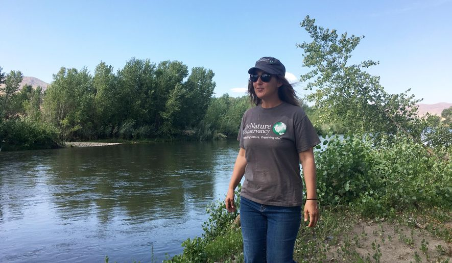 In an Aug. 30, 2017 photo, Lori Leonard of The Nature Conservancy walks along a recently restored section of the Truckee River east of Sparks, Nev. In December,  Leonard put finishing touches on a native vegetation project she hoped would repopulate a barren stretch of the Truckee River. Abundant water since then soaked the soil around the river and gave the seeds a chance to take root.  (Benjamin Spillman/The Reno Gazette-Journal via AP)