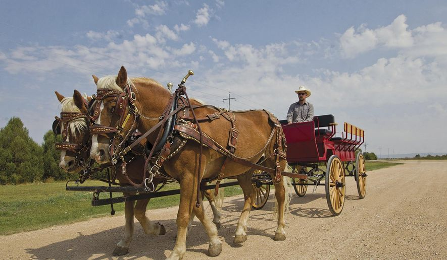 University of Wyoming Beef Unit Livestock Manager Travis Smith drives Pistol and Pete, Haflinger draft horses, on Sept. 7, 2017, at the Hansen Arena in Laramie, Wyo. The haflinger draft team is a recent addition to the UW mascot armada and pulls wagons during parades and ceremonies to highlight the efforts of the UW Extension.(Shannon Broderick/Laramie Daily Boomerang via AP)